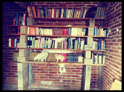 librero gatos