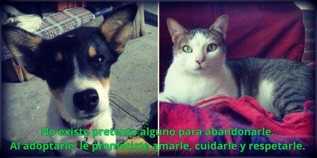 noabandones.jpg