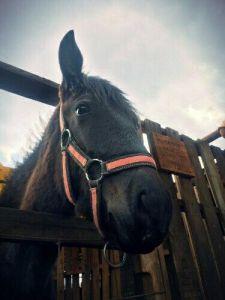 Refugio caballos