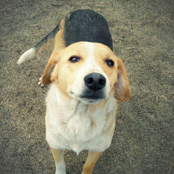adopta perro