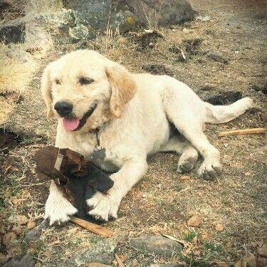 perros en adopción.